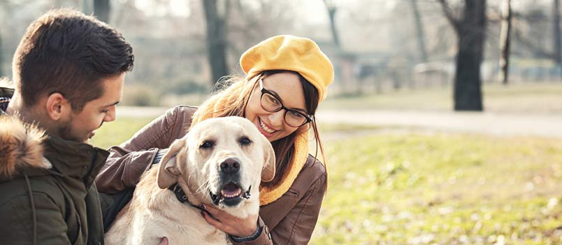 How does Getting a Pet Affect your Relationship?